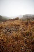 Foggy landscape Stock Photos