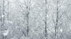 Stock Video Footage of Mega extra big global snowfall loop tree winter forest