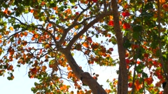 Colorful tree leafs in light wind Stock Footage