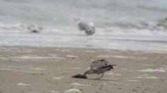 Sea gull on the beach Stock Footage