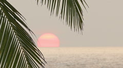 Beautiful sea sunset and palm leaf on foreground Stock Footage