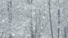 Mega extra big global snowfall loop tree winter forest Stock Footage