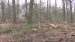 In the forest for timber felling Stock Footage