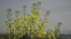 Yellow Floral, close up Stock Footage