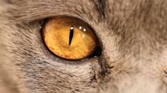 Cat eyes macro Stock Footage