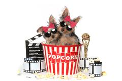 Cool Yorkshire Terrier Puppies Celebrating Hollywood Movies Kuvituskuvat