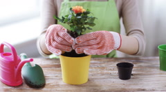 Close up of woman's hands planting roses in small pot Stock Footage