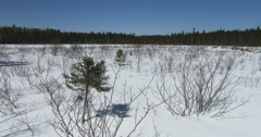 Panoramic view of the wild environment in Algonquin Provincial Park, Canada Stock Footage