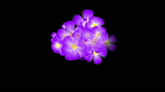 Blue and pink flowers Stock Footage