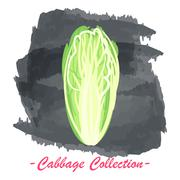 Chinese pekin vector isolated cabbage on a grunge background - stock illustration