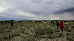 Maasai and Datooga pastoralist with herd of cattle in Ngorongoro Crater Stock Footage