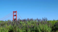 Golden Gate Bridge Tower Stock Footage