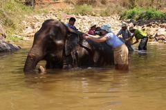 Tourist helps wash an elephant Stock Photos