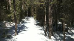 Branch of a pine tree covered in snow on a trail - stock footage