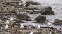 Seagulls on the seashore / 4k footage Stock Footage