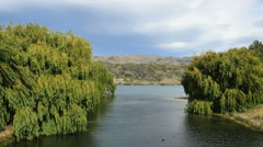 New Zealand Lake Dunstan willow branches dangle into channel Stock Footage