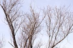 Stock Photo of barren tree