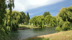 Stock Video Footage of New Zealand Lake Dunstan willow trees surround water