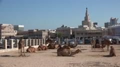 Camel farm, Souq Waqif, historic bazaar, Doha, Qatar Stock Footage
