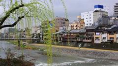 Kamogawa river in Kyoto. Stock Footage