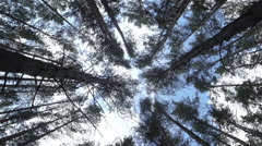 Dizziness in the forest Stock Footage