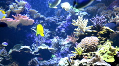 Tropical fish near coral reef Stock Footage