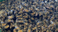 Bee and honeycomb Stock Footage
