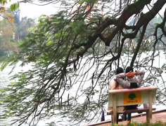 Pair of lovers sitting on benches along the lake Stock Footage