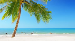 Idyllic paradise beach with white sand, blue sky and coconut palm tree  Stock Footage