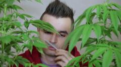 Man smelling Marijuana joint Stock Footage
