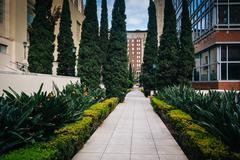 Stock Photo of Gardens along a walkway at Maguire Gardens, in downtown Los Angeles, Californ