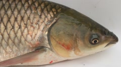 head of carp - stock footage
