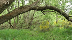New Zealand Mataura River bank arching branch Stock Footage