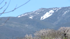 Cherry trees and mountain top with a patch of snow Stock Footage