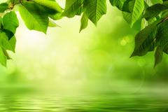 Greenery and water background - stock photo