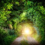 Tunnel of trees leading to light Stock Photos