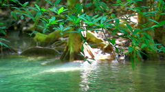 HD: Green tree and flowing river in rainforest, 1920x1080 Stock Footage