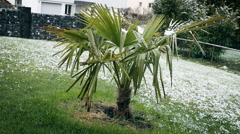 Snow covered palms in spring season Stock Footage