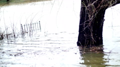 Flooded area 4k under water Stock Footage