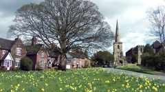 Daffodils golden old English church steeple cottages blowing breeze Stock Footage