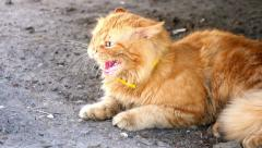 Ginger cat and evil Stock Footage