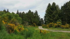 New Zealand Otago dirt road curves past scotch broom Stock Footage