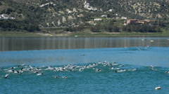 Participating in a triathlon swimming in a lake Stock Footage