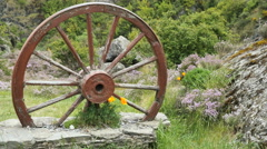 New Zealand poppies in base of mounted wagon wheel Stock Footage