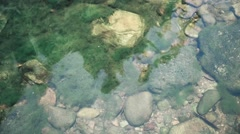 Moss with little rocks under water in waterfall area, top view - stock footage
