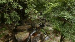 View down to brook - waterfall Stock Footage