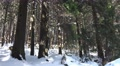 4k Winter and snow in sunny Harz mountain forest 4k or 4k+ Resolution