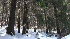 Stock Video Footage of 4k Winter and snow in sunny Harz mountain forest