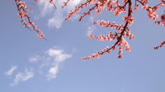 Blooming trees - stock footage