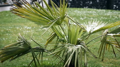 Close up shot of snow covered palms in spring season Stock Footage